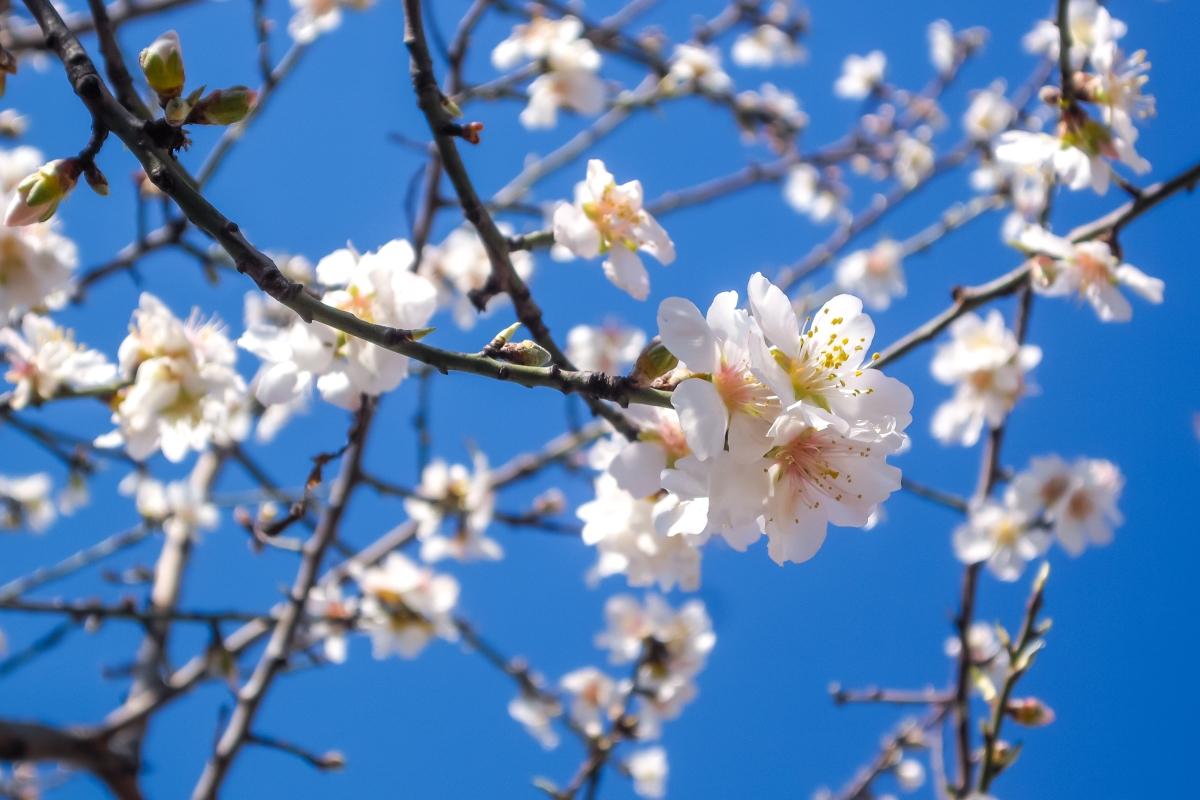 detail flower photo